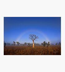 Fogbow Boab Tree Photographic Print