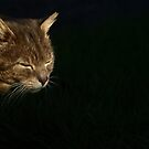 Portrait of tabby cat by turniptowers
