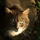 Portrait of grey cat with big yellow eyes by turniptowers