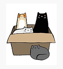 Cats in a Box Photographic Print
