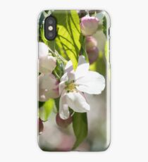 White blossoms on an ornamental tree iPhone Case/Skin