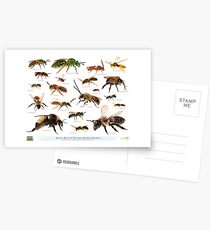 Beautiful Bees of Eastern North America Postcards