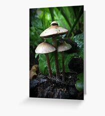 wet mushrooms Greeting Card