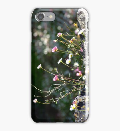 Wall Daisies  iPhone Case/Skin