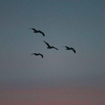 Sea Birds by Lazzolino