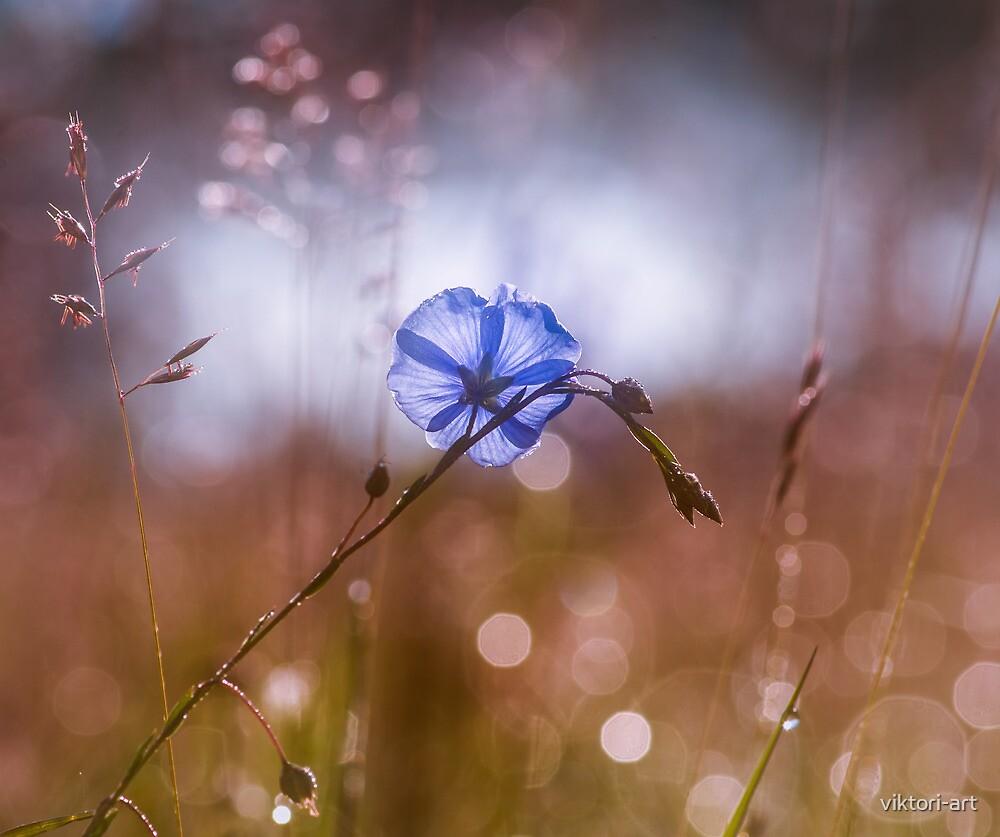 Blue flax flower by viktori-art