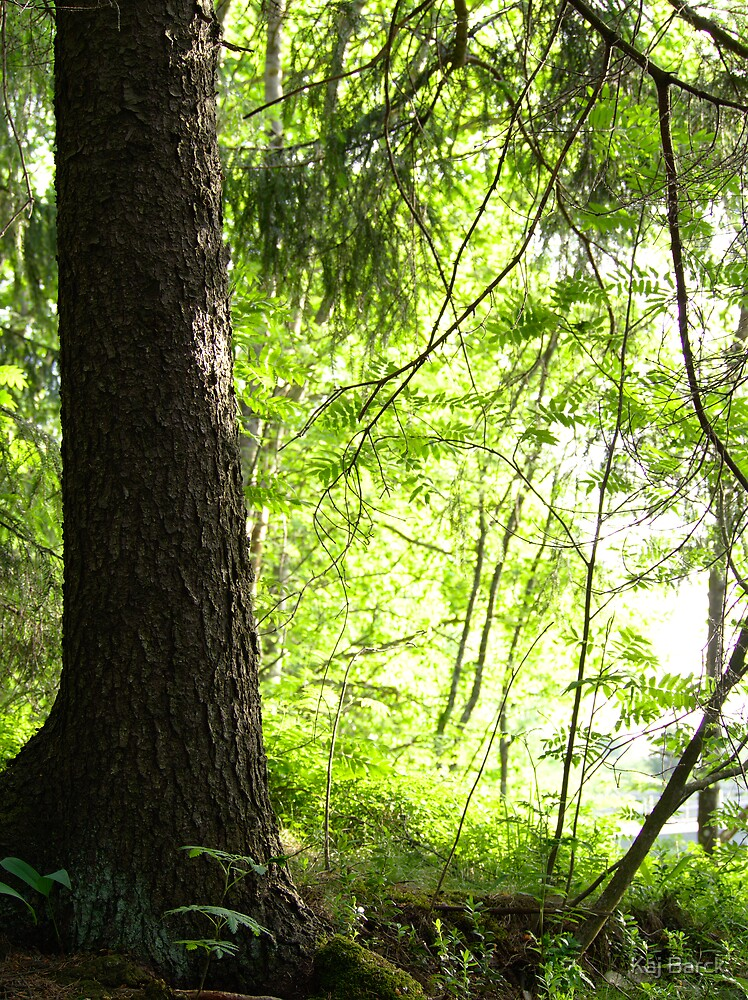 Spruce by the riverbank by Kaj Barck