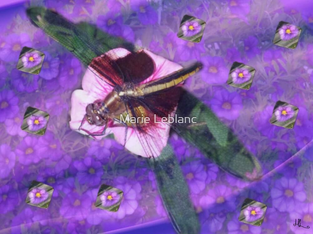 DRAGONFLIES by Marie Leblanc
