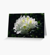Great White Rhododendron Greeting Card