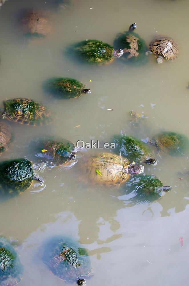 Turtlely Confusing by OakLea
