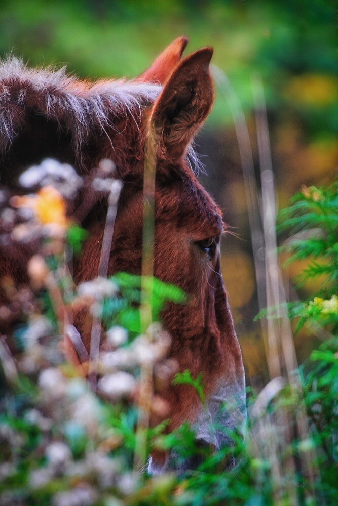 A Mule Named Horse by Nazareth