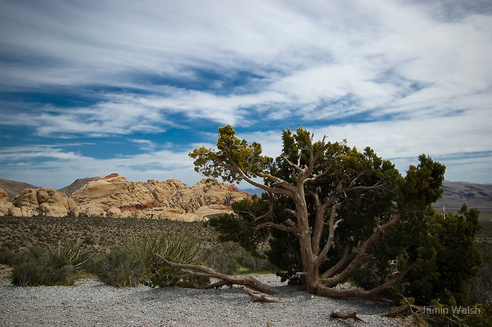 Red Rock Canyon by Jamin Walsh