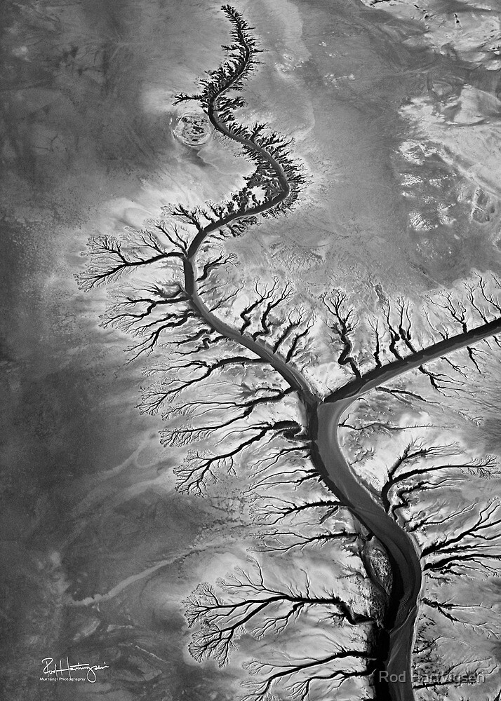 Mud Flat Arteries by Rod Hartvigsen