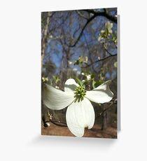 Backyard Dogwood Print Greeting Card