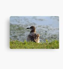 Sitting By The Water Canvas Print