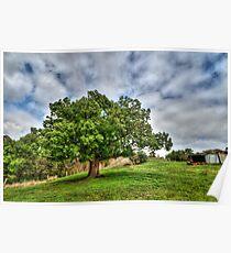 Steiglitz Tree Poster
