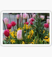 Tulips from Normandie Sticker