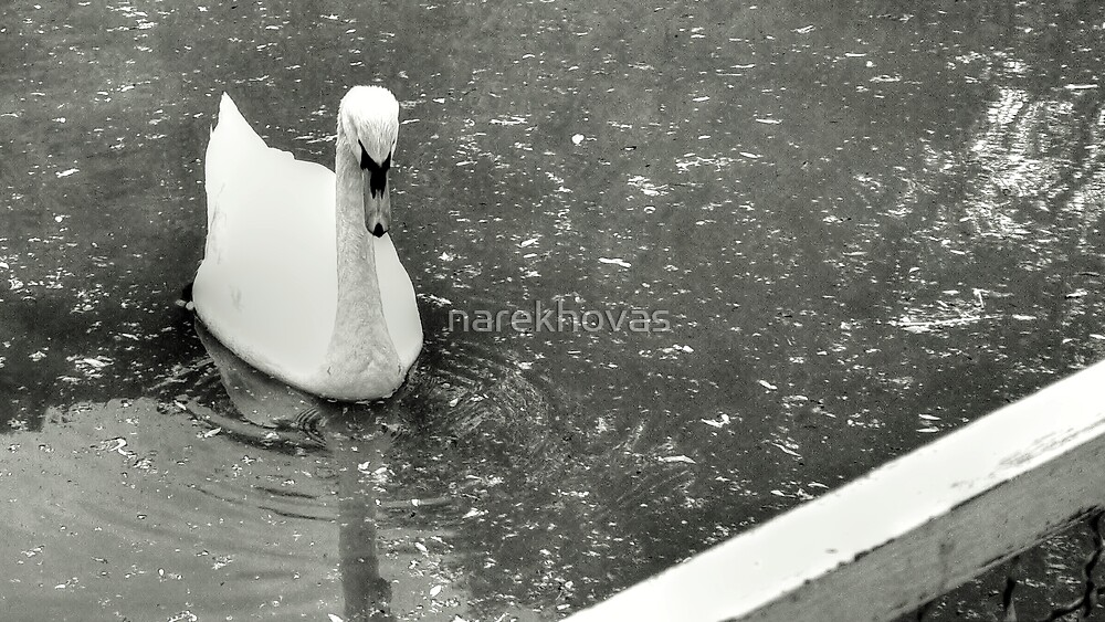 The Swan Princess by narekhovas