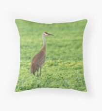 Sandhill Crane 2016-3 Throw Pillow