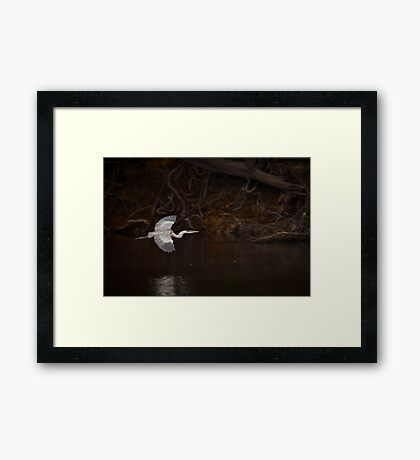 Cocoi heron (Ardea cocoi) The Beni, Bolivia Framed Print