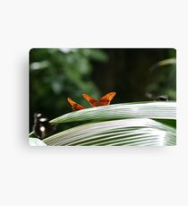 Ready to fly! Canvas Print