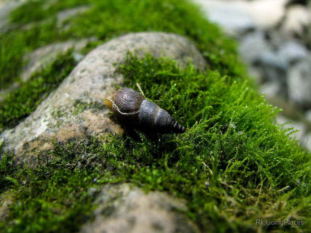 Snail Shell on Moss by RlyGoingPlaces