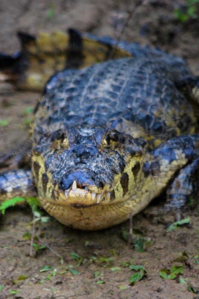 Amazonian Alligator by JoEveritt