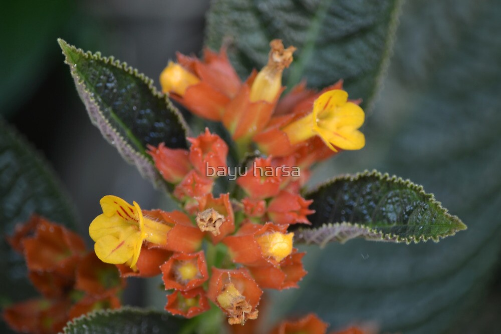 tropical flower with yellow pollen by bayu harsa