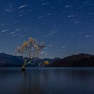 Starry Sky over Lake Wanaka's Lone Willow Tree by Kimball Chen