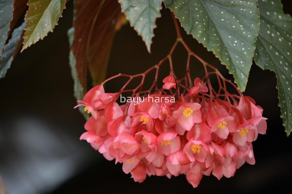 red euphorbia flower by bayu harsa