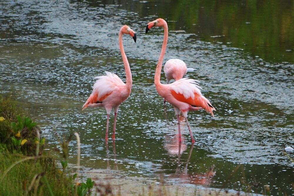 Flamingo Love by JoEveritt