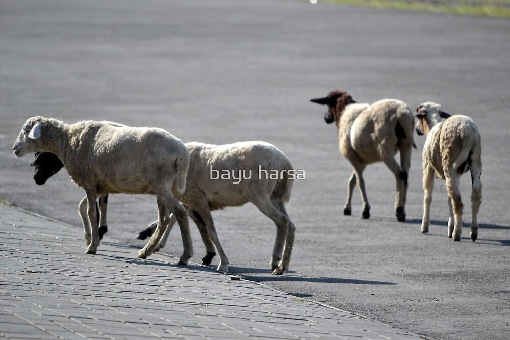 white lambs by bayu harsa