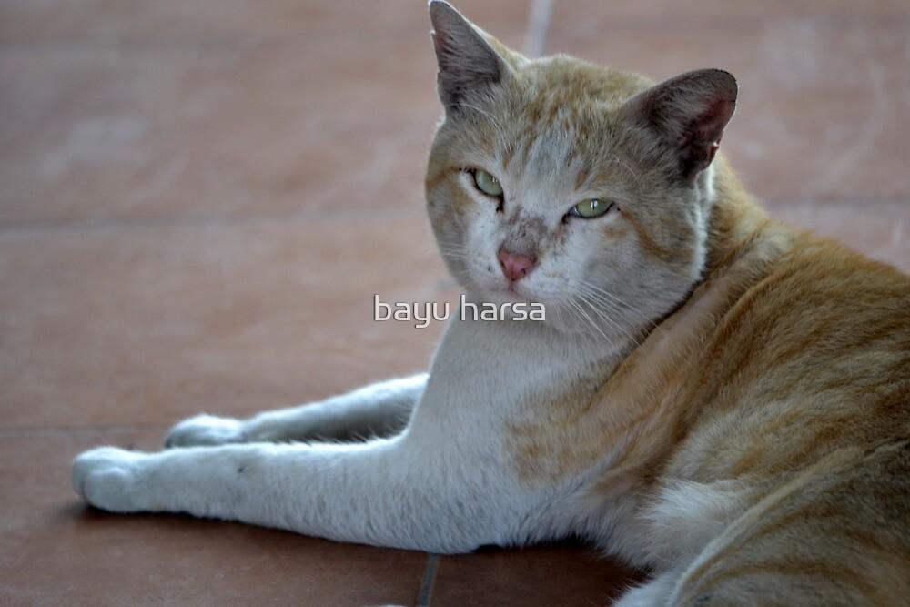 brown cat by bayu harsa