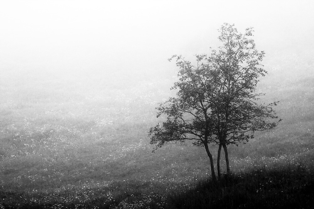 7.6.2014: Tree and Morning Fog by Petri Volanen