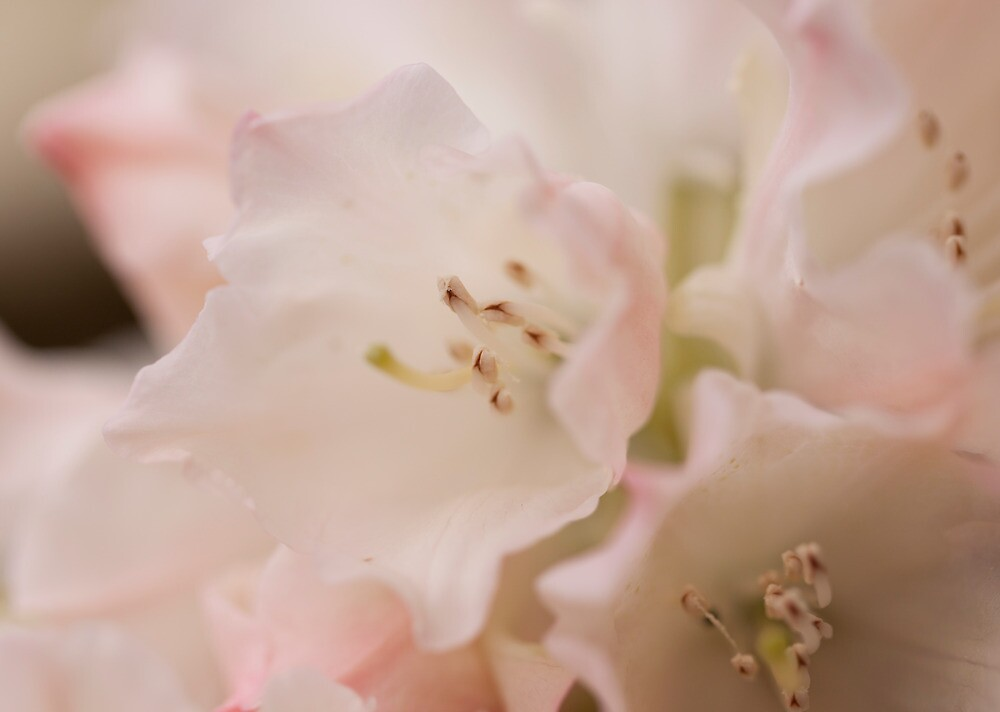 Softly Does It by karasutherland
