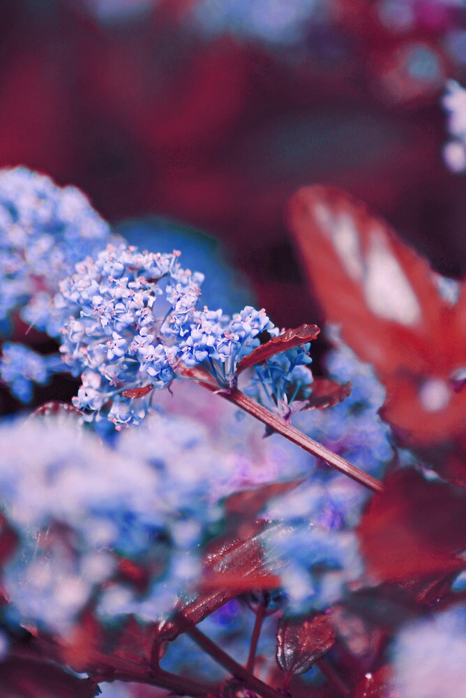 Blue  by LenkaOBS