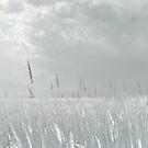 Silver Grass by Anivad - Davina Nicholas