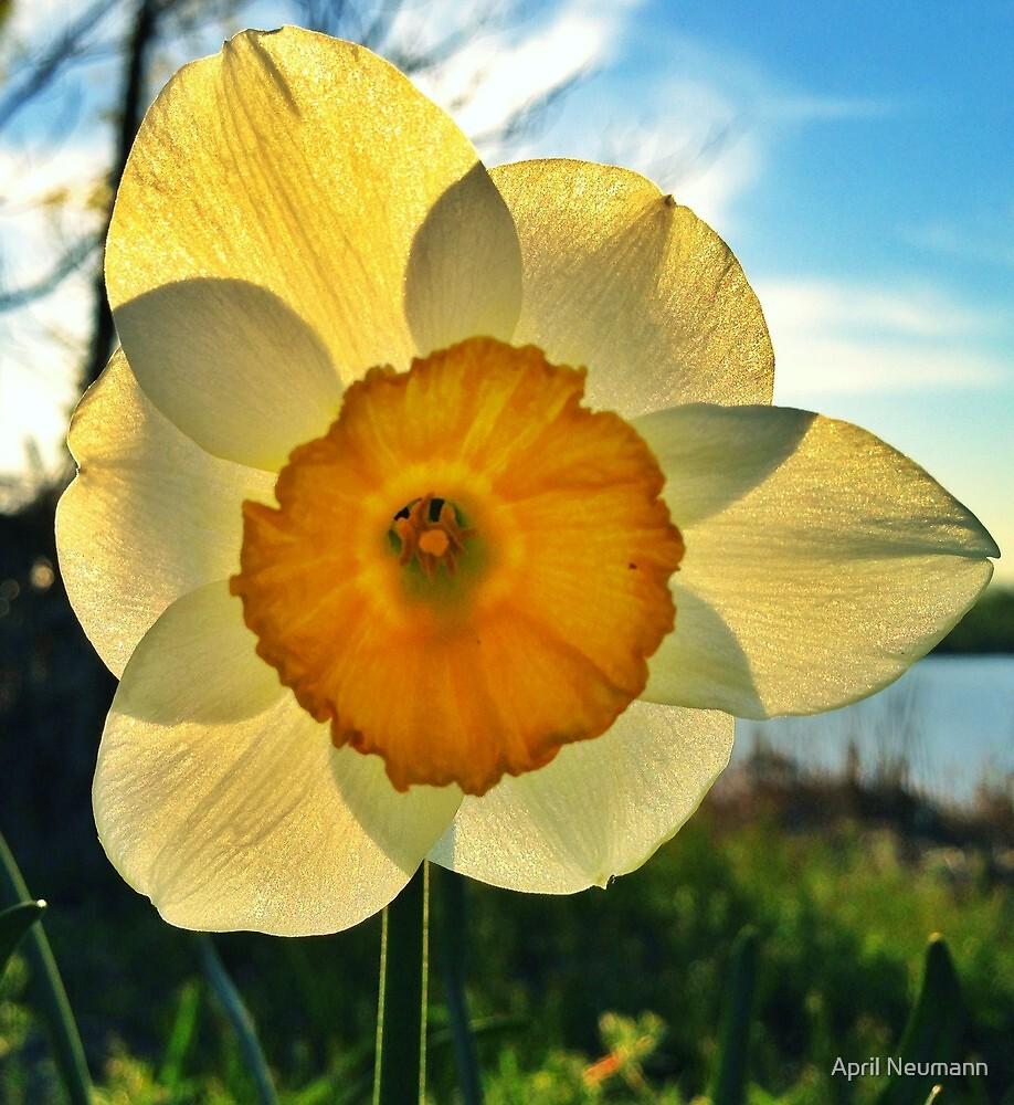 Lone Flower by April Neumann