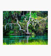 Emerald Paradise, Rainbow Springs Florida Photographic Print