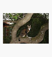 The Trees Are Mishu's Second Home Photographic Print
