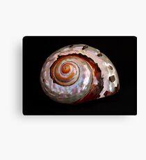 Sea Shell on Black Canvas Print