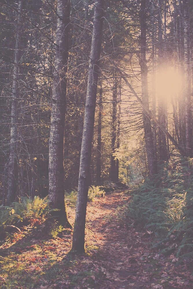 Tree Light by Eric Muhr