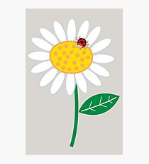 Whimsical Summer White Daisy and Red Ladybug Photographic Print