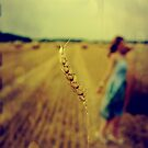 straw by 5letters