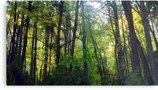 Wildwood Trail  by karaskye