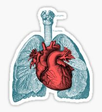 Red Heart and Lungs Human Anatomy art Sticker