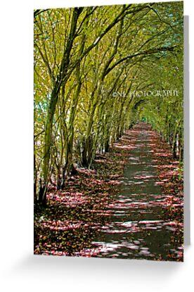 The long walk through Autumn by NickIsaLewis