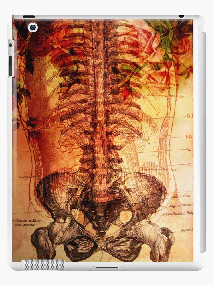rose and ribs by DawnOrigins