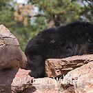 Sleepy Time Bear by Luann wilslef