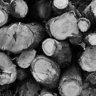 Logs by perfectexposure